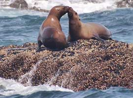 Wildlife like these sealions abound